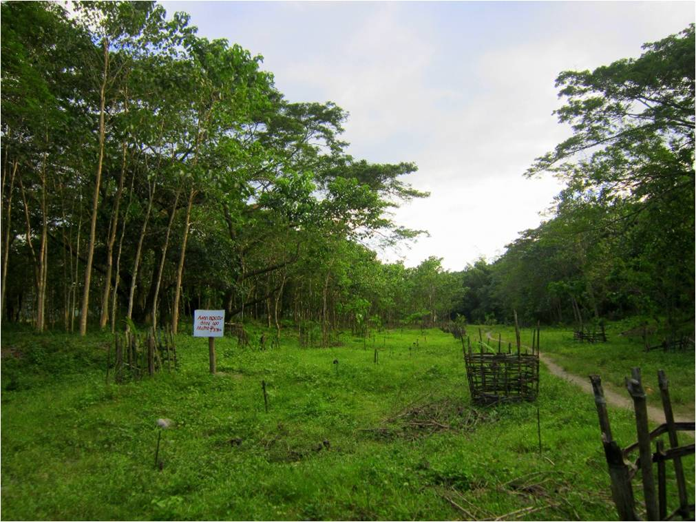 Barangay Up-uplas has set aside a wide plot of land near a tributary of the Amburayan Riverwhich they have carefully reforested with the help of a number of organizations including JVOFI. They have strictly implemented local ordinances for its protection and maintenance.